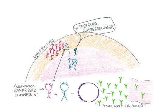 immunologi-3